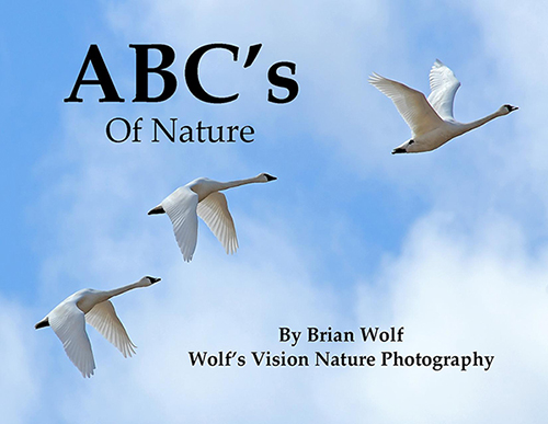 Nature ABC Book