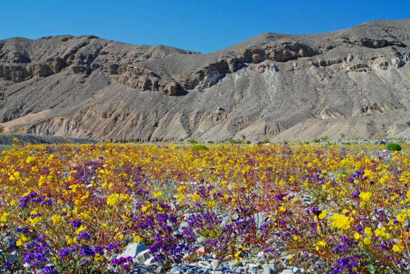 Photo gallery deathvalley wolfs vision nature photography death valley color desert colors desert flowers mightylinksfo