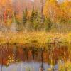 Pond On Gunflint Trail - Full viewing the full collection of MN fall colors select the Fall Colors/Scenery link and select Minnesota.