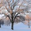 Sunrise On Hoar Frosted Trees