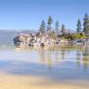 Tree Reflections - Lake Tahoe