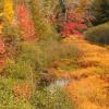 Colorful Creek - Vilas County, MN