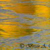 Gunnison River Abstract